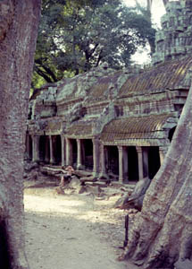 Ta Prohm,         seemingly left as it was found