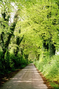 Country lane in Hampshire
