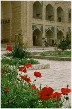 Bukhara Poppies