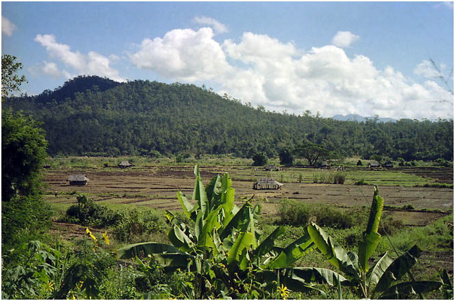 Much of Thailand is under agriculture of one sort or         another
