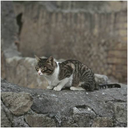 feral cats         scratching out a living from lizards and hapless rodents